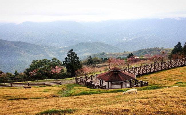 cingjing farm dai loan 4
