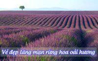 rung hoa oai huong 3