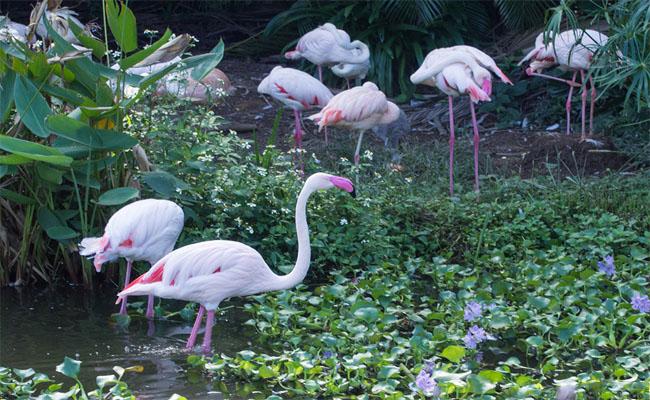 taipei zoo 1
