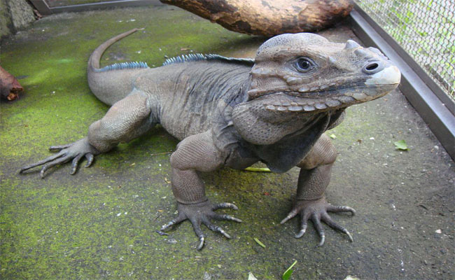 taipei zoo 6