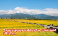 con duong lua brown road o dai loan 1