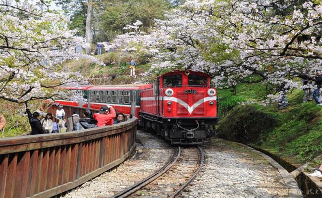 duong sat Alishan Railway 4
