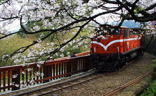 duong sat Alishan Railway 5