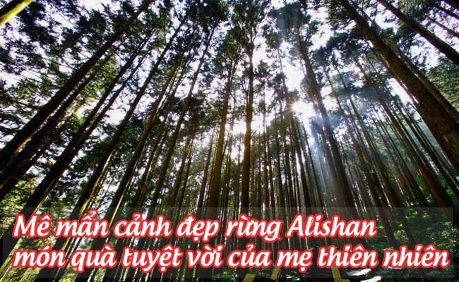 rung alishan 4