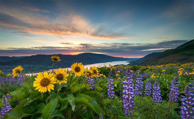 le hoi hoa Ta Shee Blooming Oasis 3