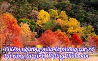 rung tai sinh wuling dai loan 2