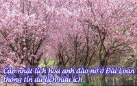 Cập nhật lịch hoa anh đào nở ở Đài Loan, thông tin du lịch hữu ích